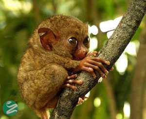 25 عکس دیدنی از نوزادان حیوانات نادر