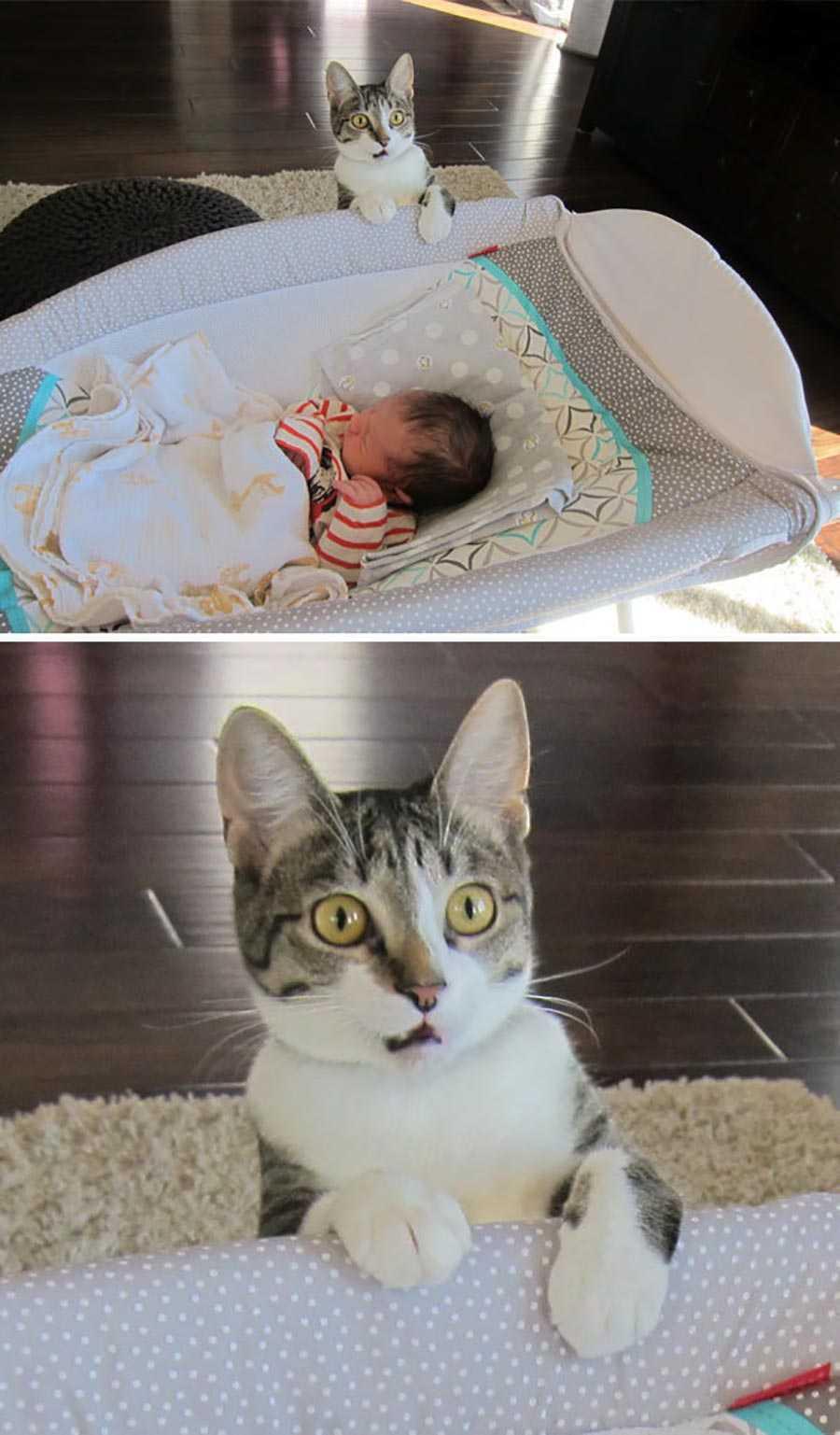 اولین باری که گربه، عضوی کوچک و جدیدی از خانواده را می بیند.