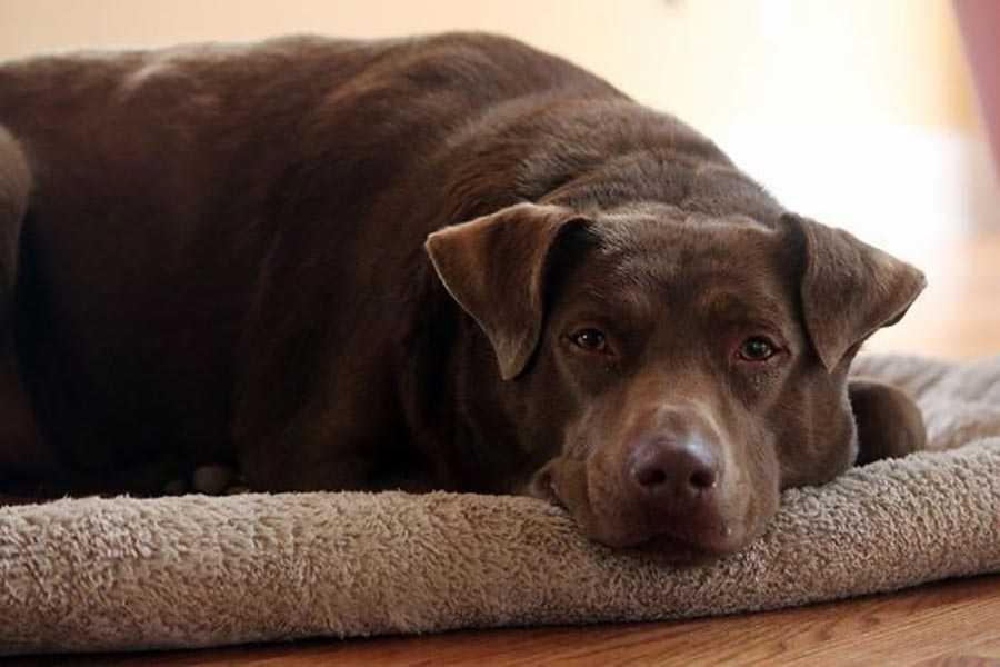 اولین تجربه این سگ دوستداشتنی از خوابیدن داخل یک خانه در کل عمرش