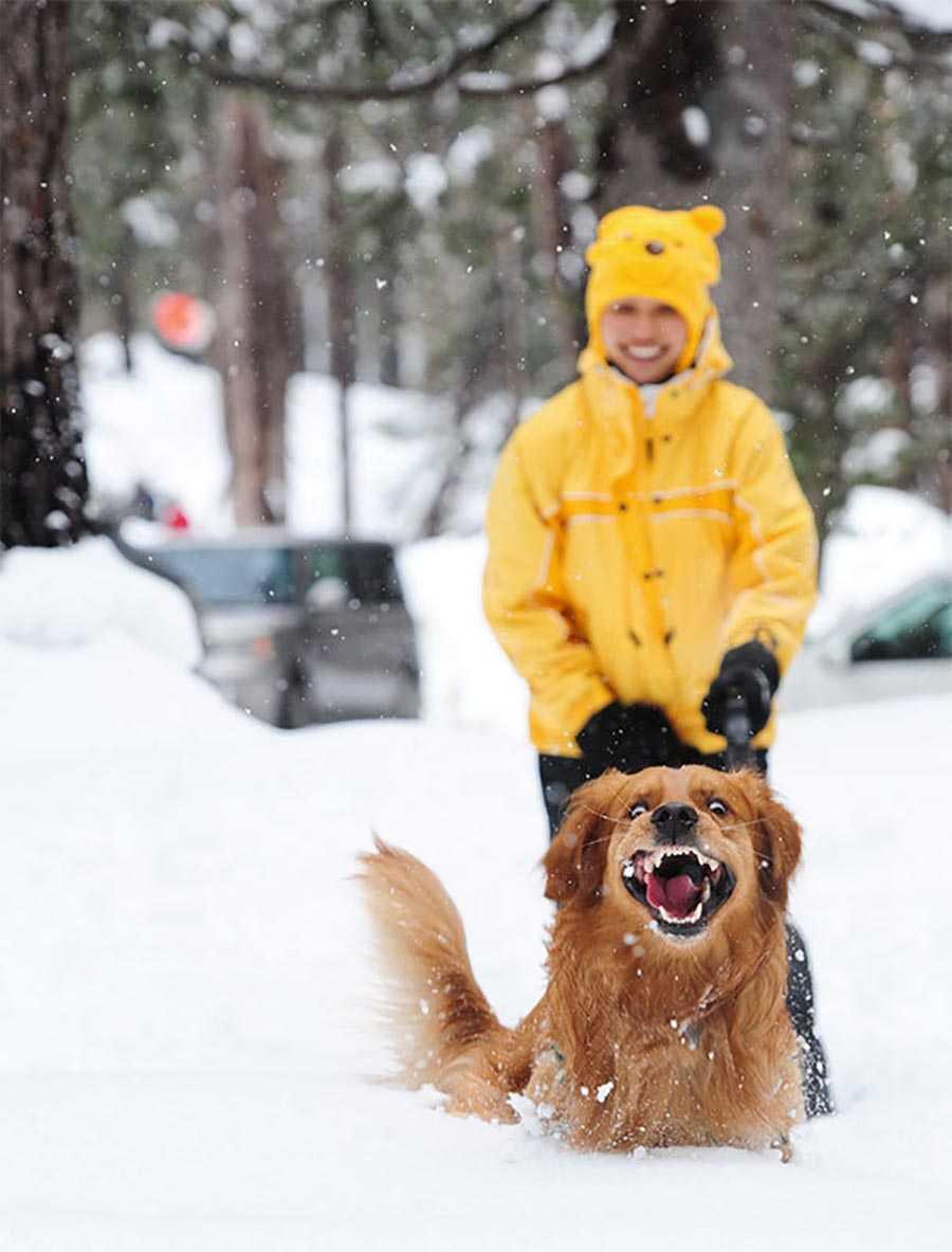 اولین باری که این توله سگ، خودش را در میان برف ها می بیند