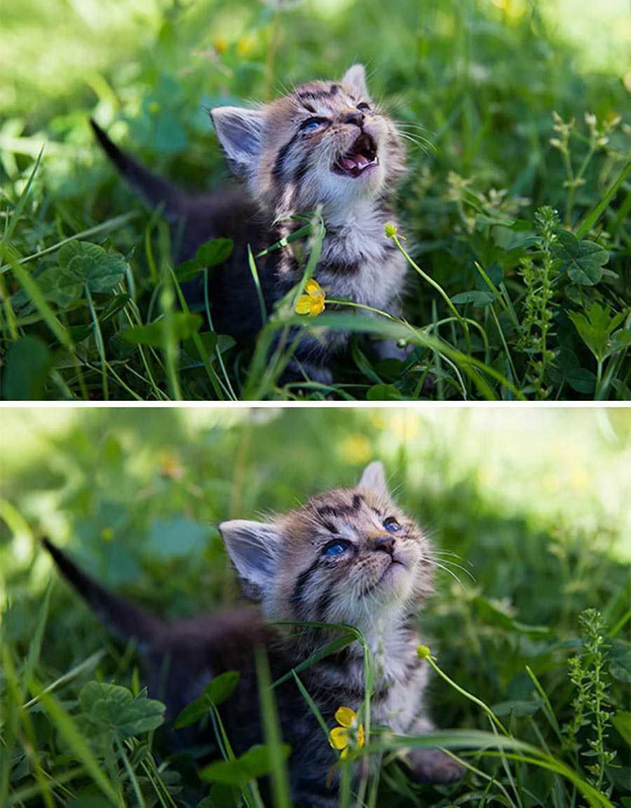برای اولین بار که این بچه گربه در معرض نور خورشید قرار می گیرد.