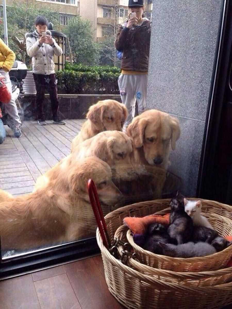 اولین باری که چند سگ، بچه گربه ها را می بینند.