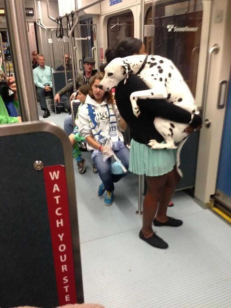 اولین باری که این سگ سوار مترو می شود.