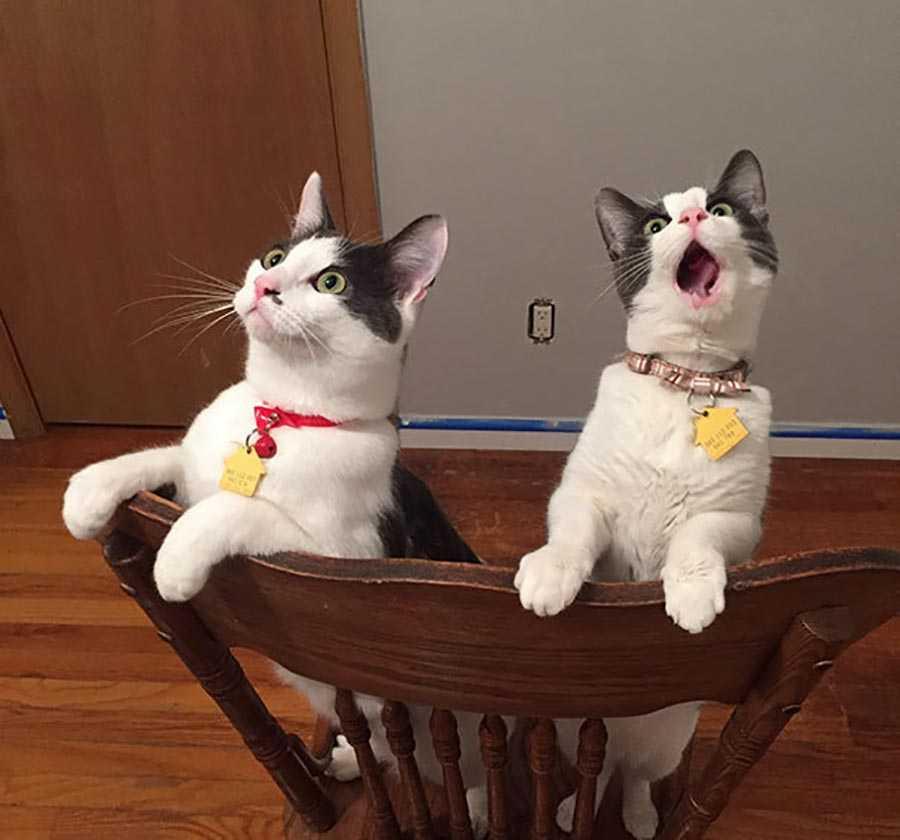 اولین باری که این دو گربه حرکت پنکه سقفی را می بینند.