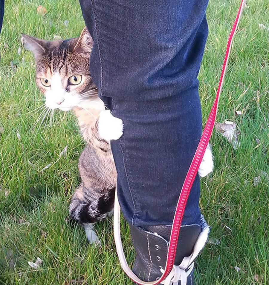 اولین باری که گربه ، بیرون از خانه را می بیند و احساس ترس می کند