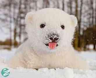 واکنش های جالب و خنده دار حیوانات در اولین دیدار