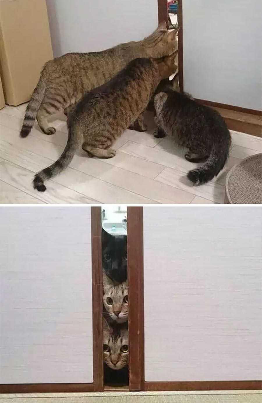 اولین بار که گربه ها در حال دیدن ورزش انسان ها در خانه هستند.