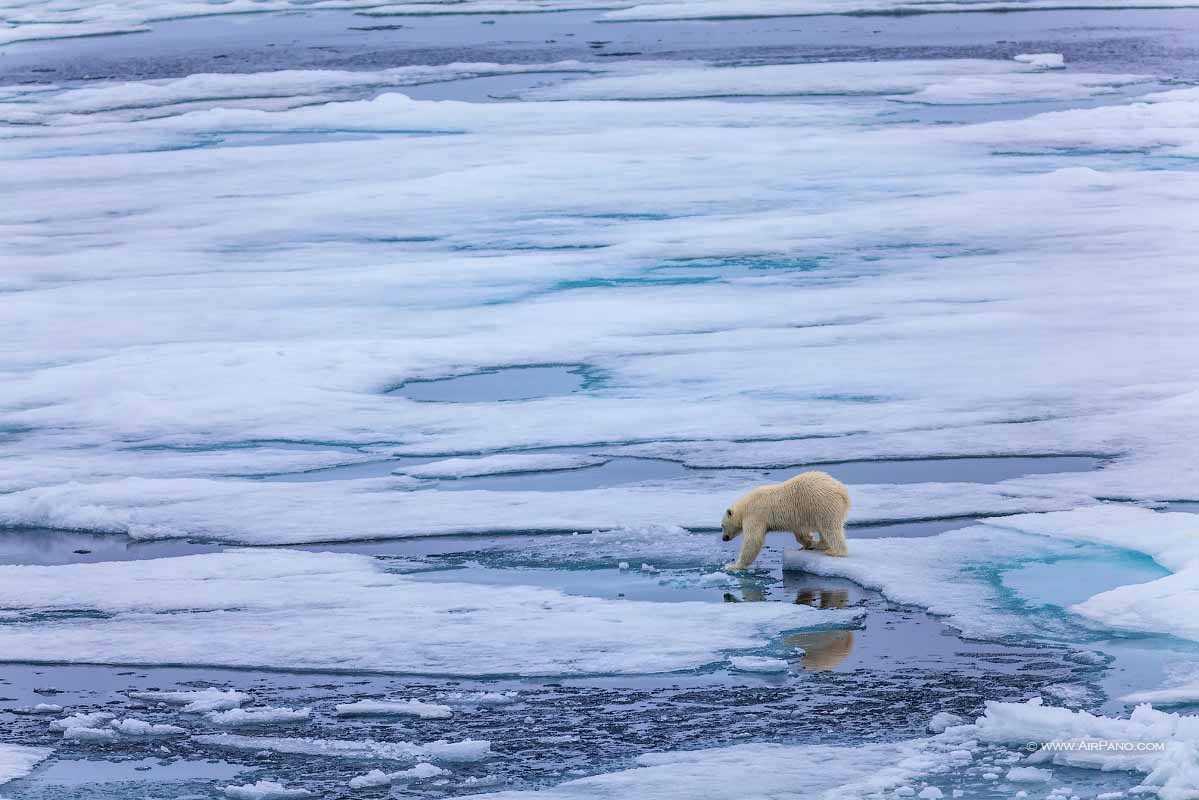 قطب شمال 3