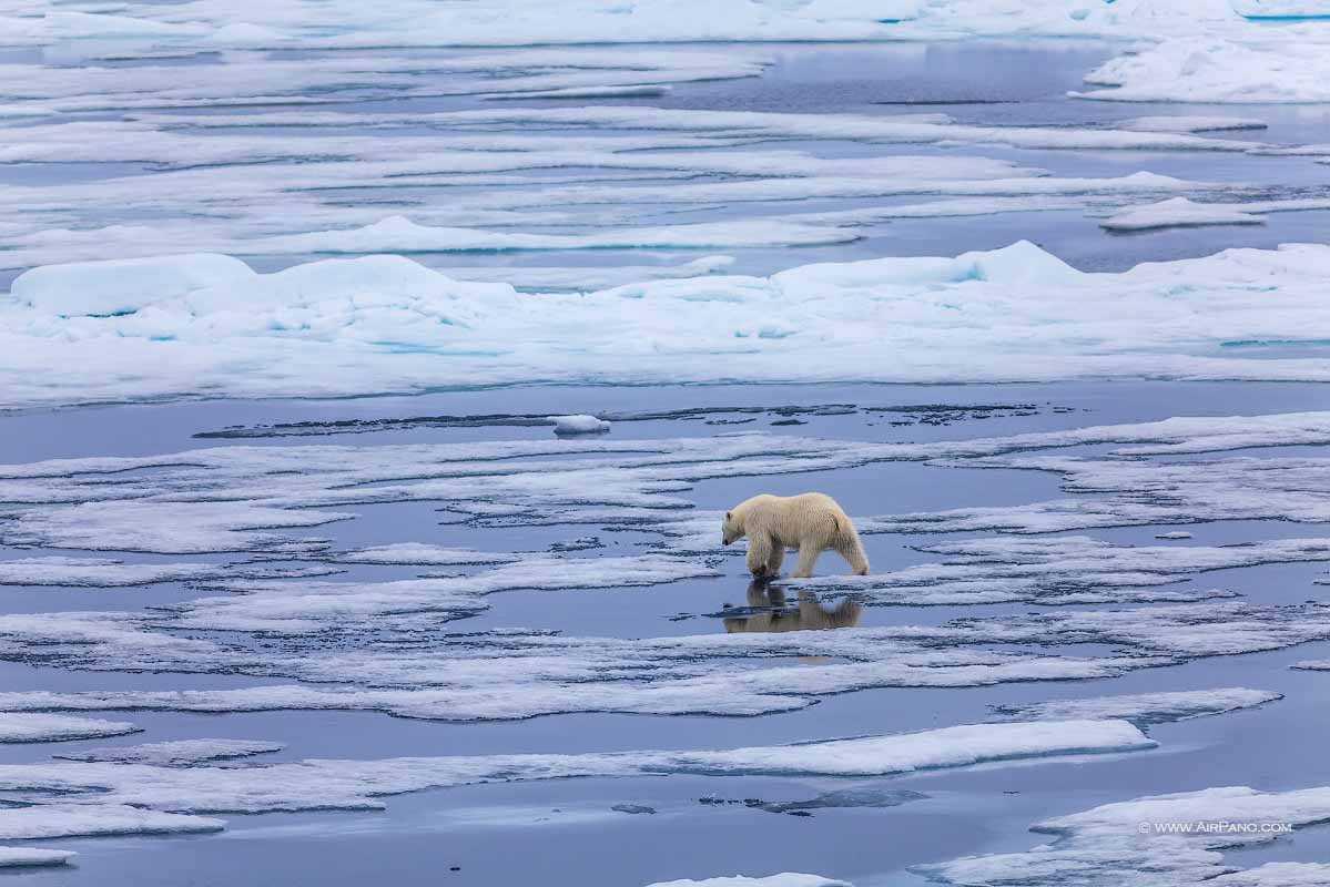 قطب شمال 16