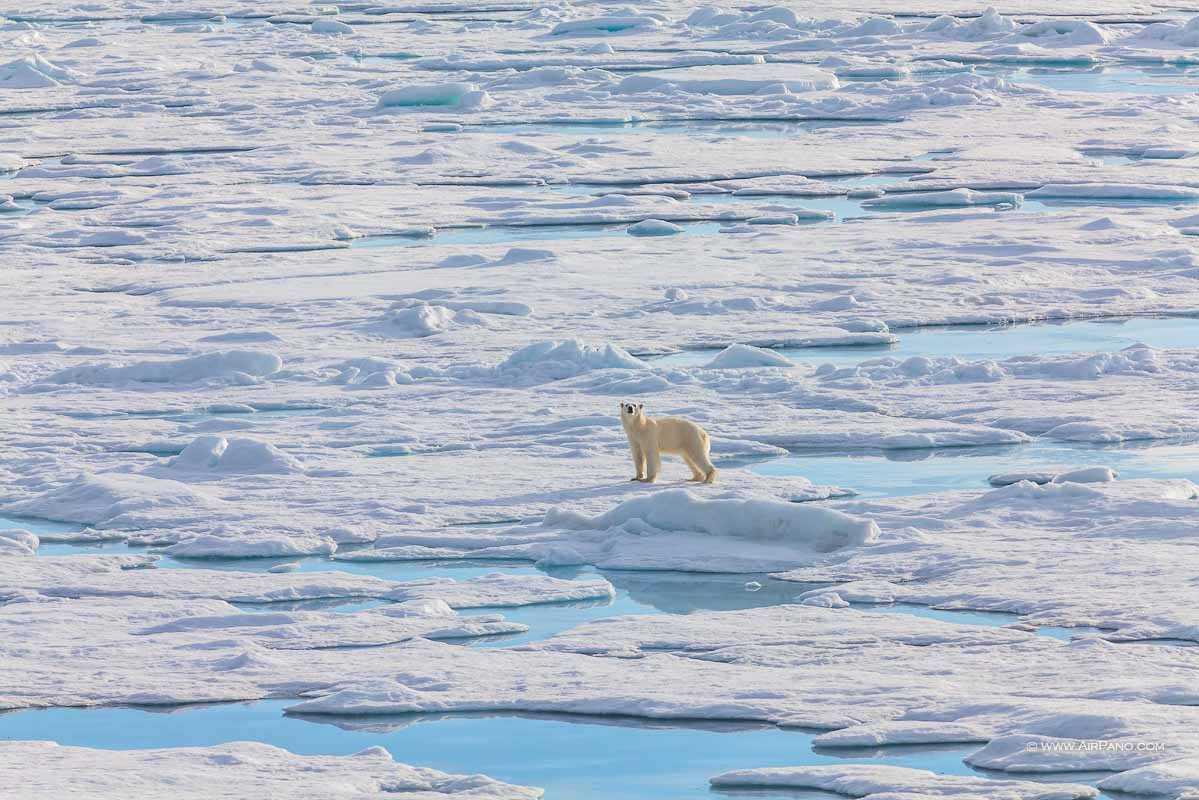 قطب شمال 12