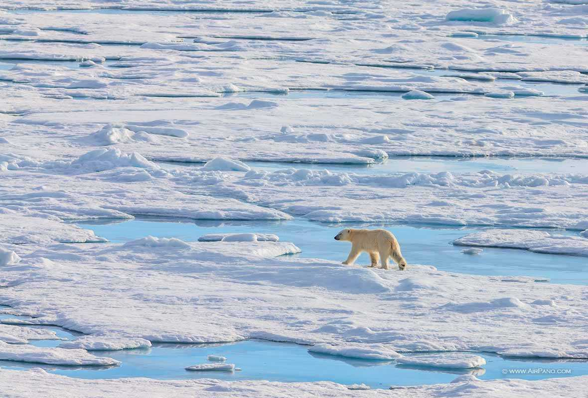 قطب شمال 14
