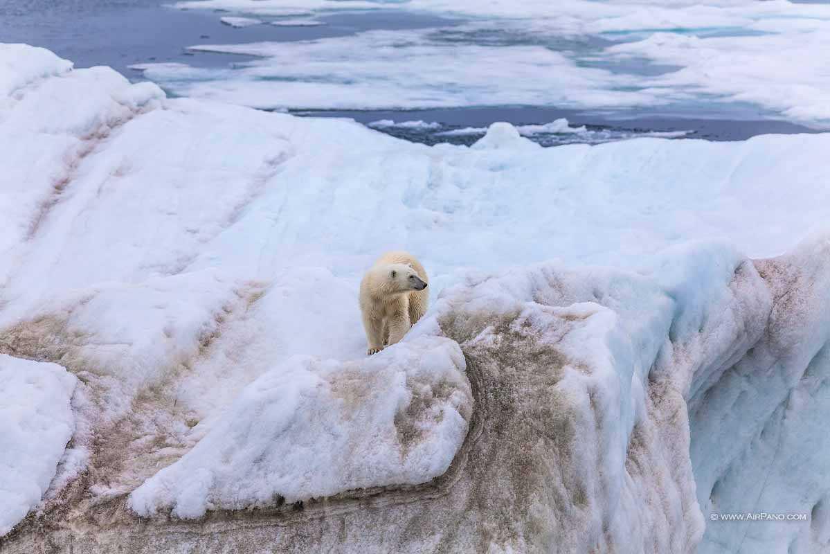 قطب شمال 15