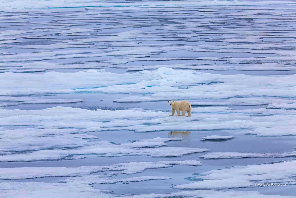 قطب شمال 10