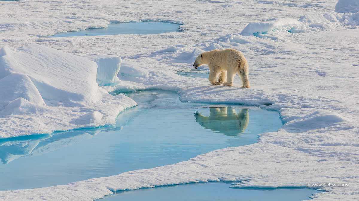 قطب شمال 21