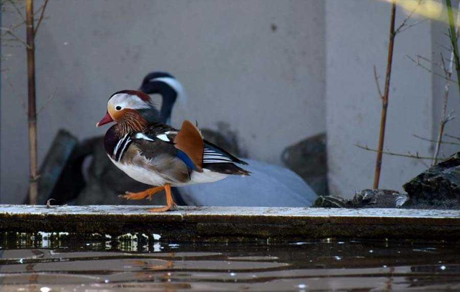 عکس پرندگان آستارا