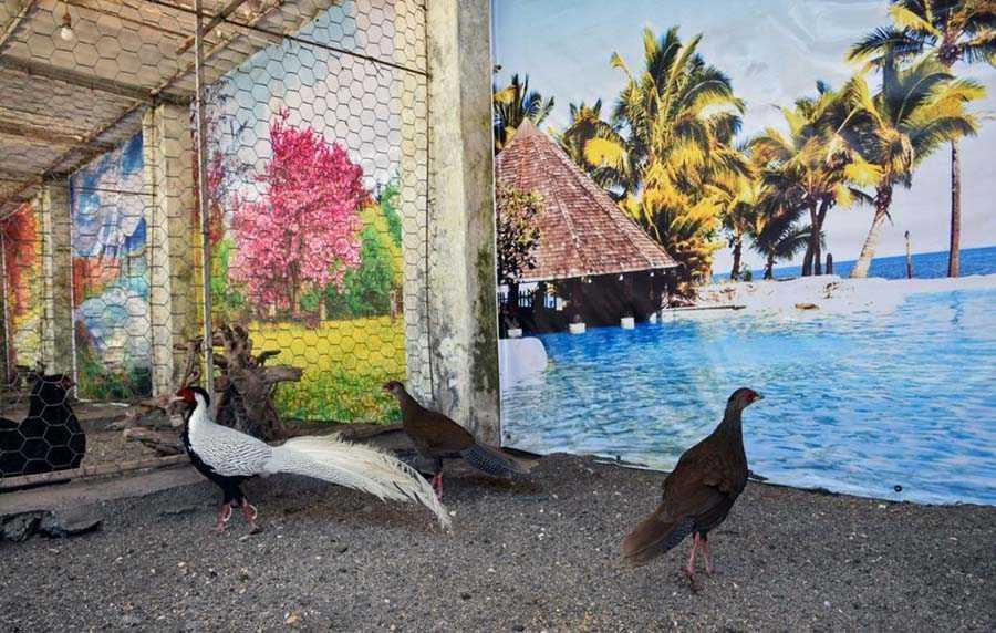 نمایی از باغ پرندگان آستارا