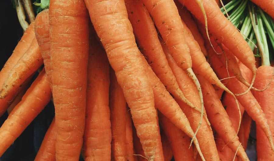 هویج ها