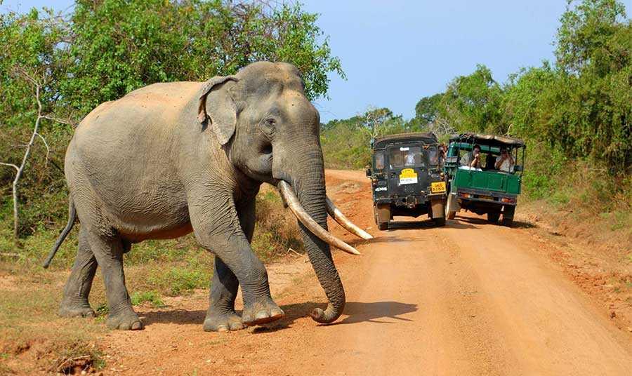 پارک ملی یالا، سریلانکا