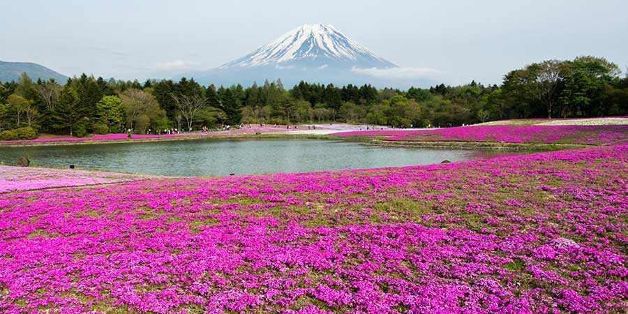 پارک ملی فوجی هاکونه ایزو