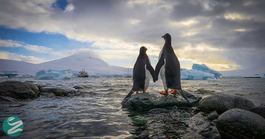 عکس پنگوئن های قاره جنوبگان