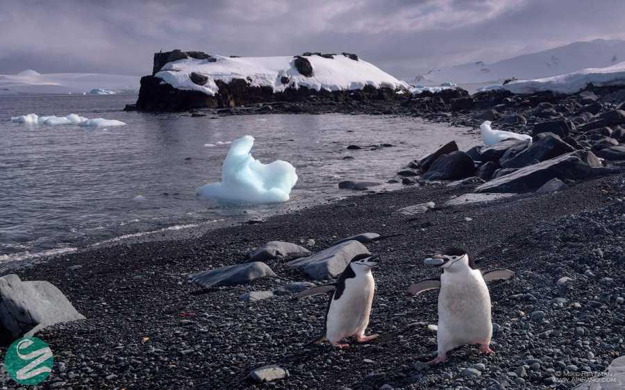 تصاویر پنگوئن های قاره جنوبگان