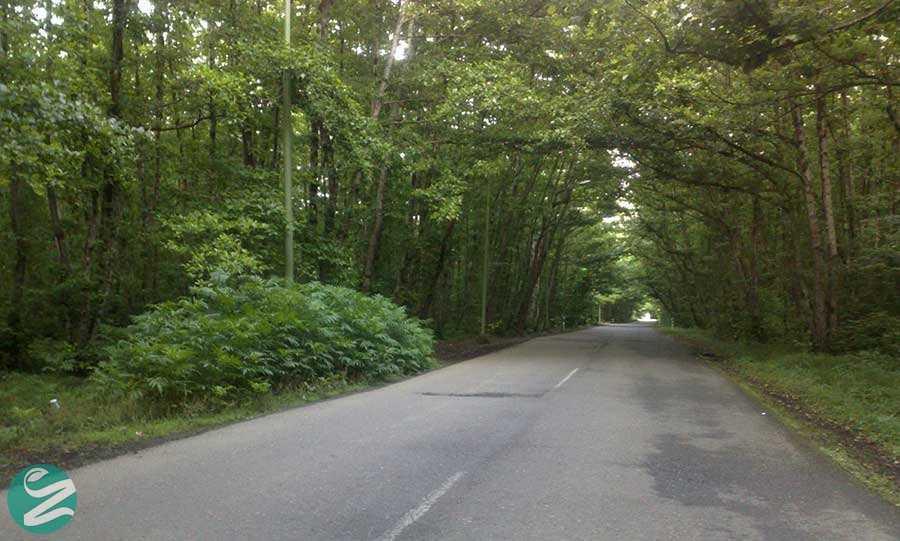 پارک جنگلی گیسوم تالش