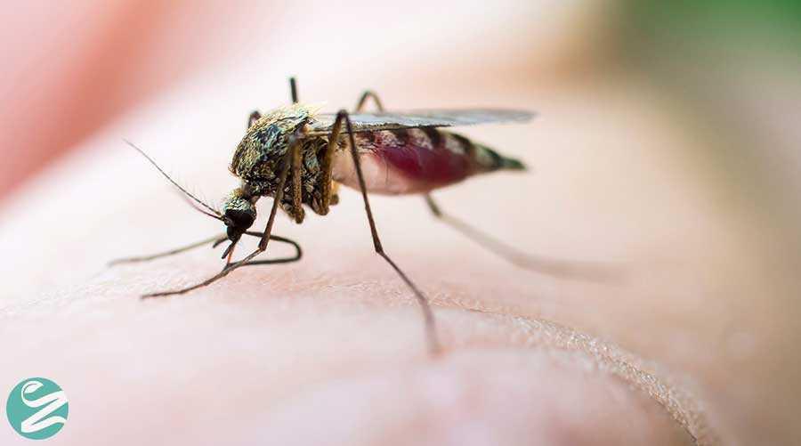 درمان نیش پشه با 10 روش خانگی