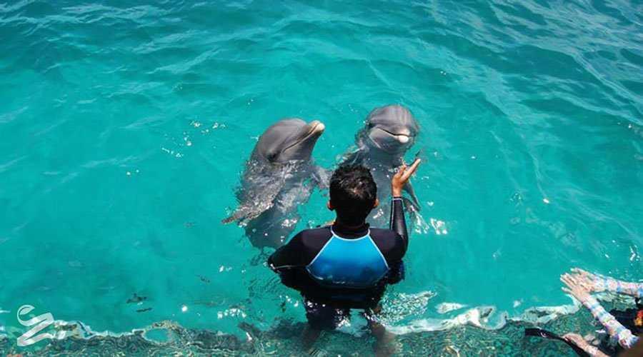 جاهای دیدنی کیش - پارک دلفین
