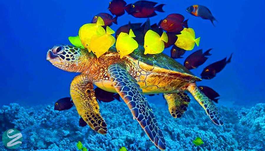 جاهای دیدنی کیش - لاک پشت های دریایی