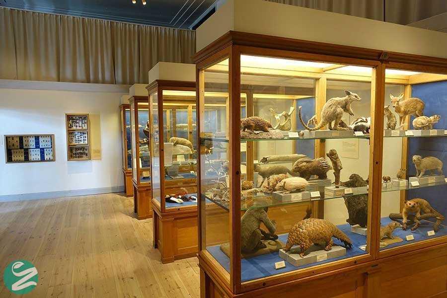 موزه تاریخ طبیعی شارجه، Sharjah Natural History Museum