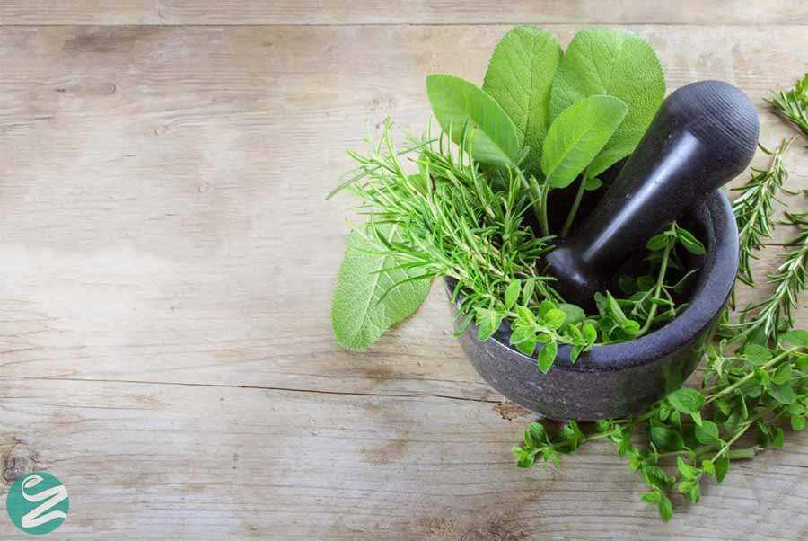 گیاهان دارویی برای درمان کبد چرب