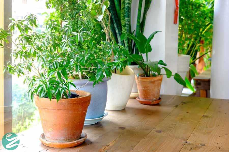 تمیز کردن هوای داخل خانه با گیاهان
