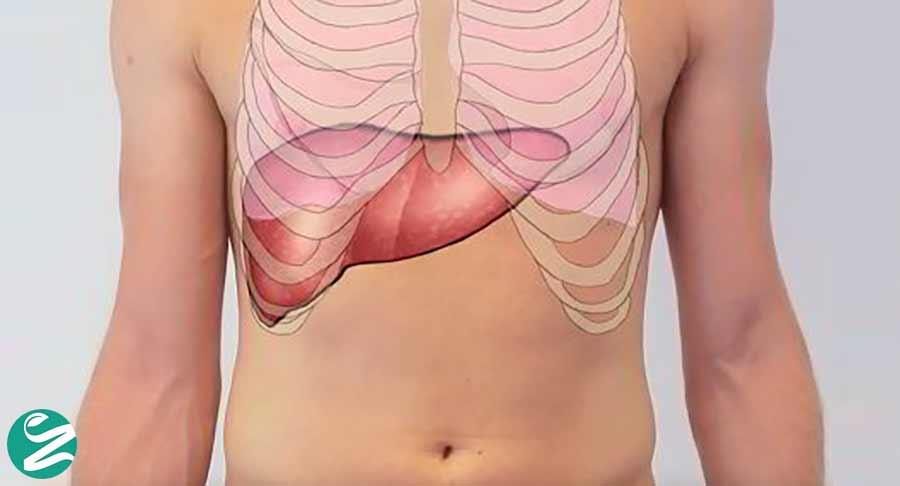 کبد بزرگ؛ علائم، تشخیص و درمان