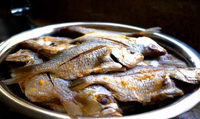 خرید انواع ماهی تازه و میگو