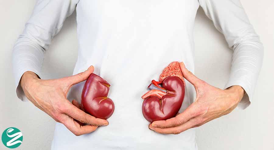 مصرف پروتئین زیاد و آسیب به کلیه