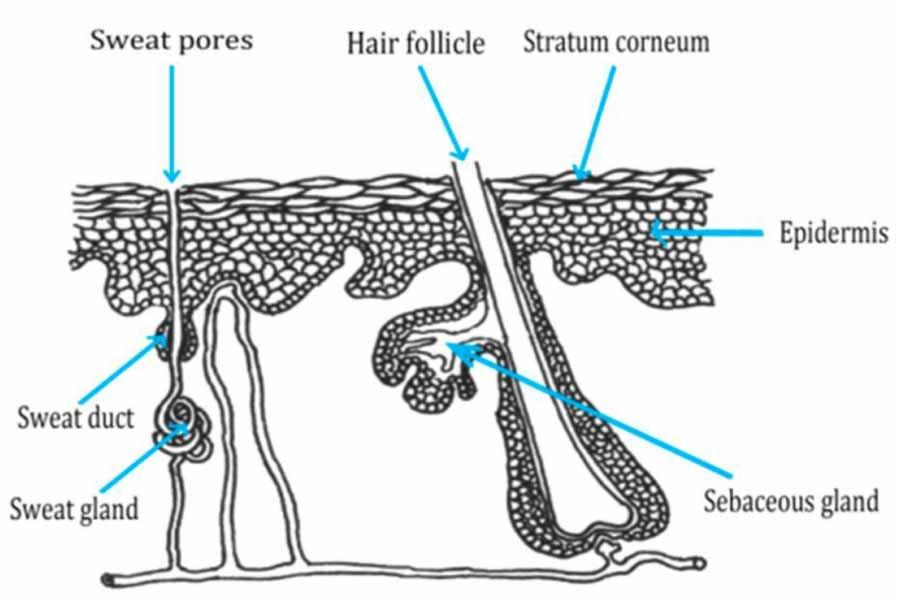 جلوگیری از ریزش مو با مصرف زعفران
