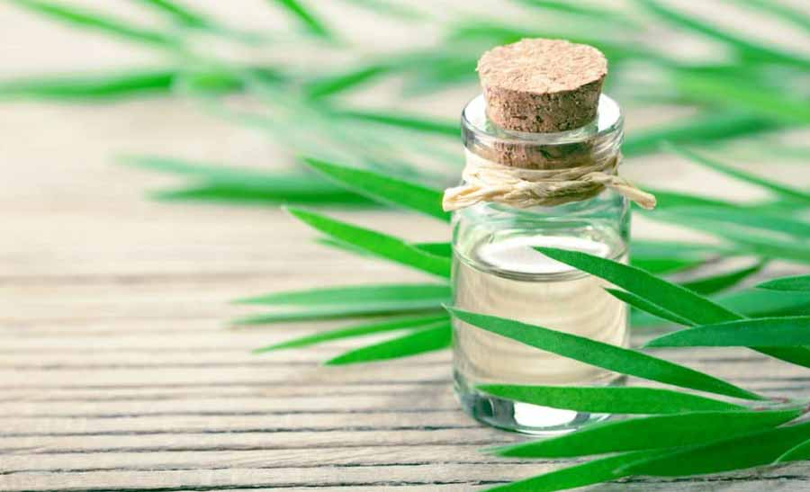 روغن درخت چای برای درمان عفونت