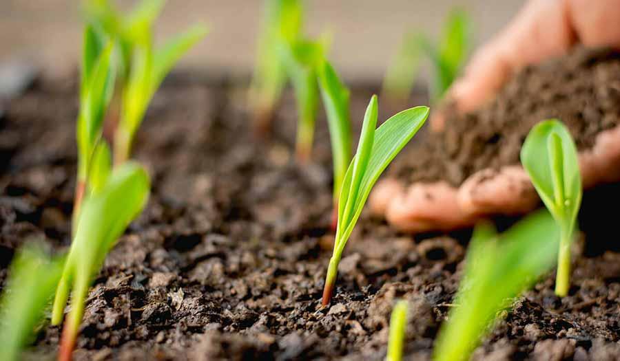 کشاورزان بخوانند: راهکار افزایش ماندگاری محصولات چیست؟