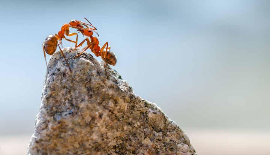 زندگی مورچه ها و بهره وری