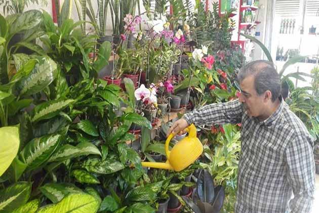 تاثیر پرورش گل و گیاه در مبارزه با افسردگی